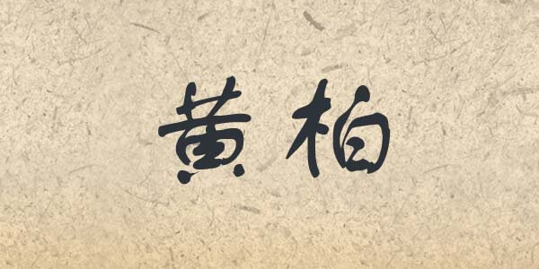 Huang Bai written in Chinese